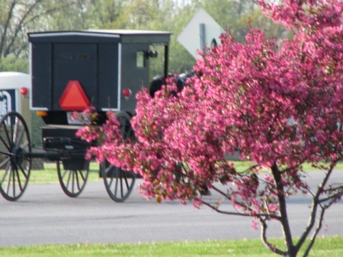 Amish Country Foods