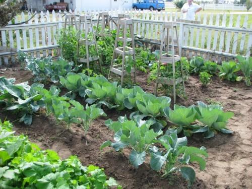Garden/Orchard/Farming