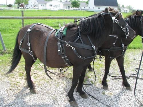 Parts Horse Tack The Horse Tack