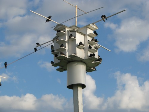 Purple Martin House Kits