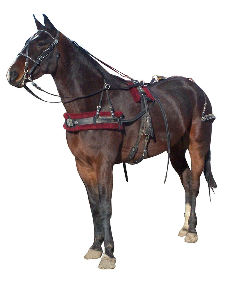 horse drawn buggy,cart,harness New Russet Leather ... |Horse Buggy Harness