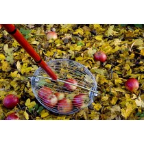 Free Ideas - Various Uses for Apples