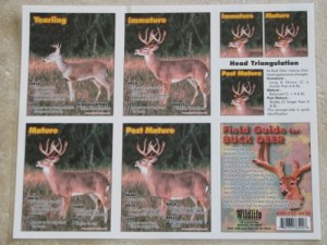 Field Guide for Buck Deer