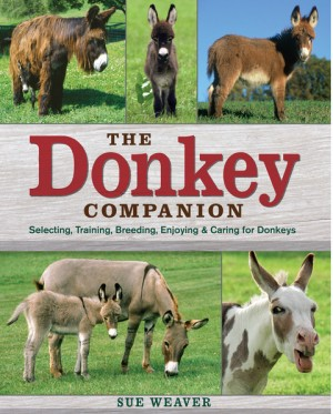 Donkey Companion, The